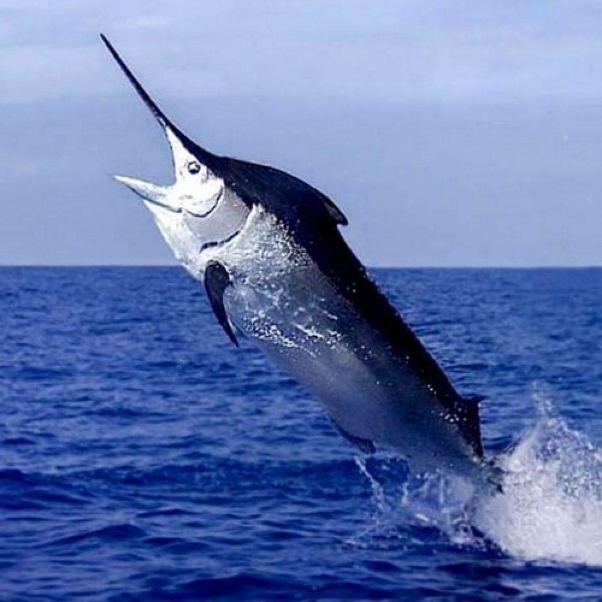 Passion Pêche