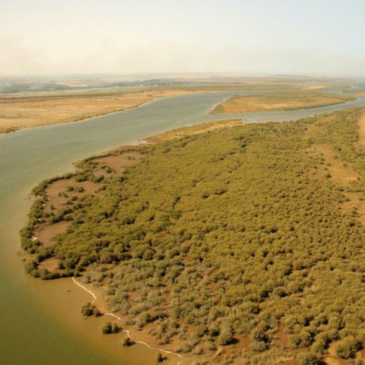 Descubrimiento de los islotes escondidos de del río Senegal - Una jornada