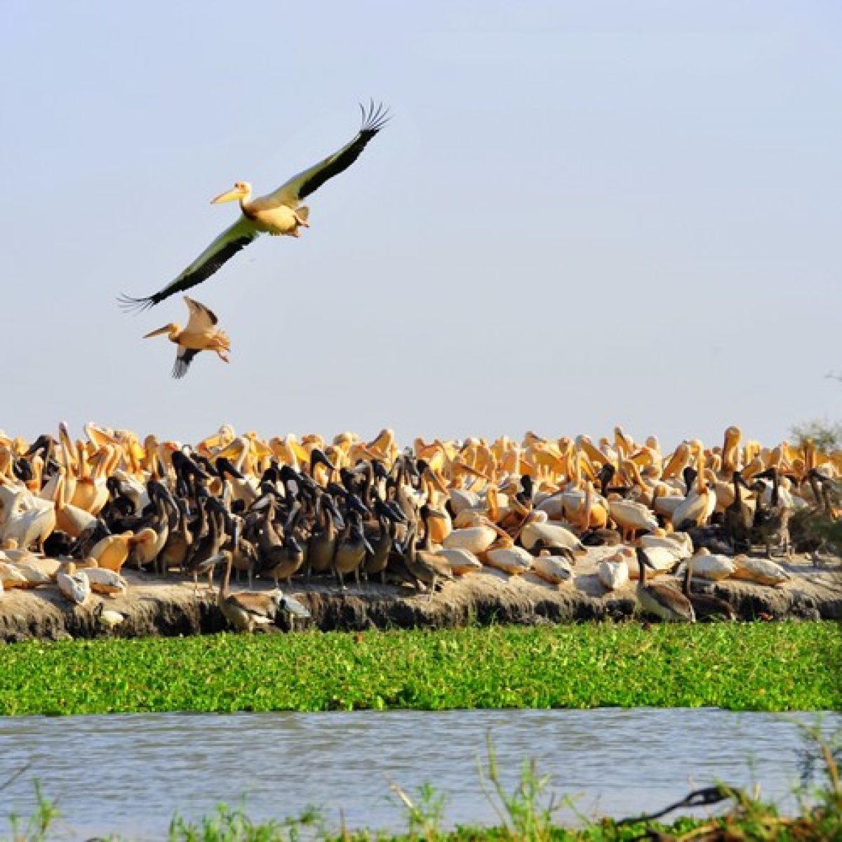 El Parque Nacional de los Pájaros de Djoudj - Media jornada o jornada