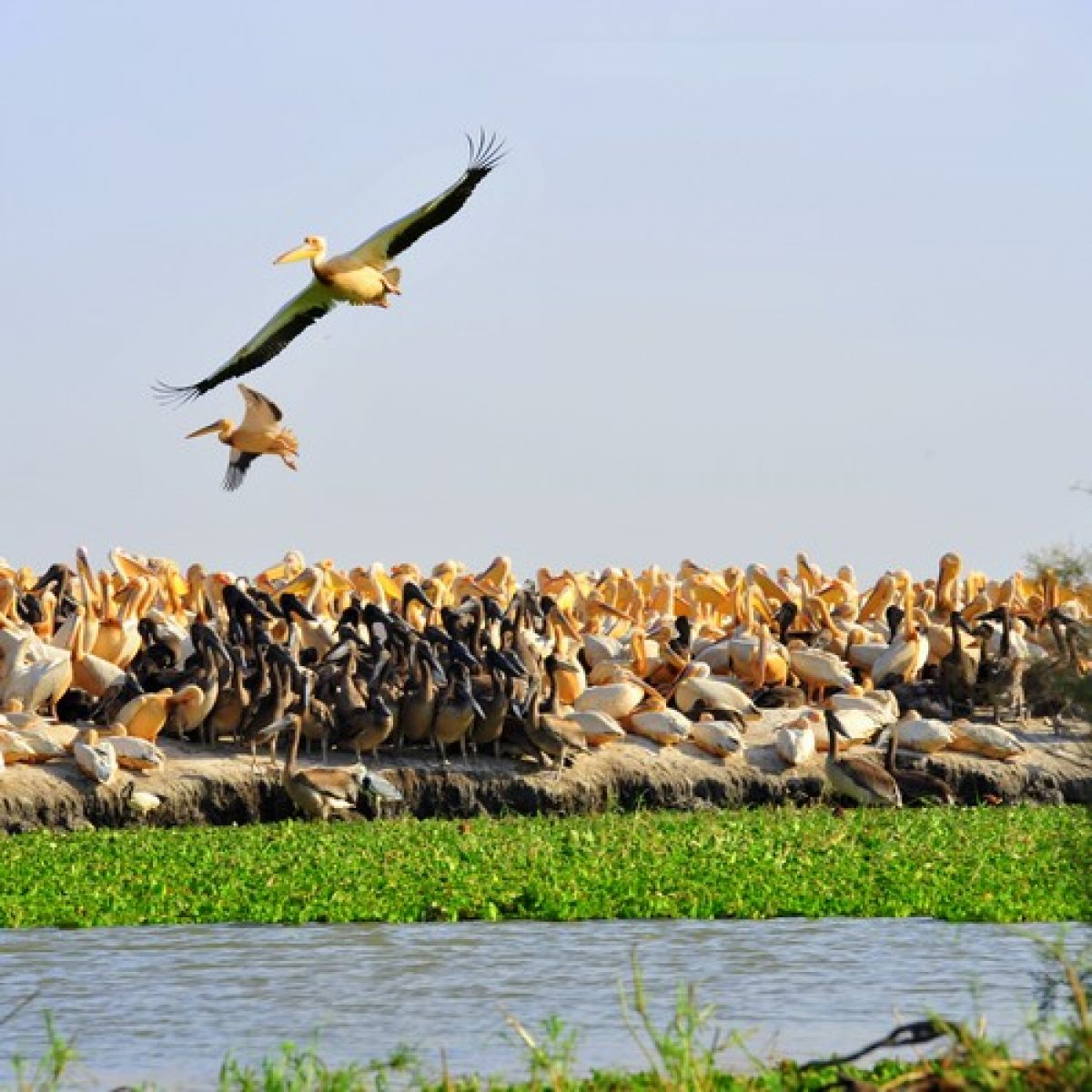 The Djoudj Birds National Park - 1/2 Day or 1 Day