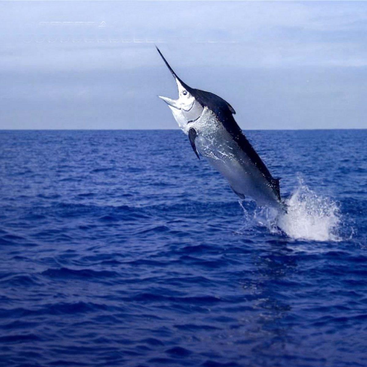 Salida de pesca deportiva o pesca de altura - Jornada