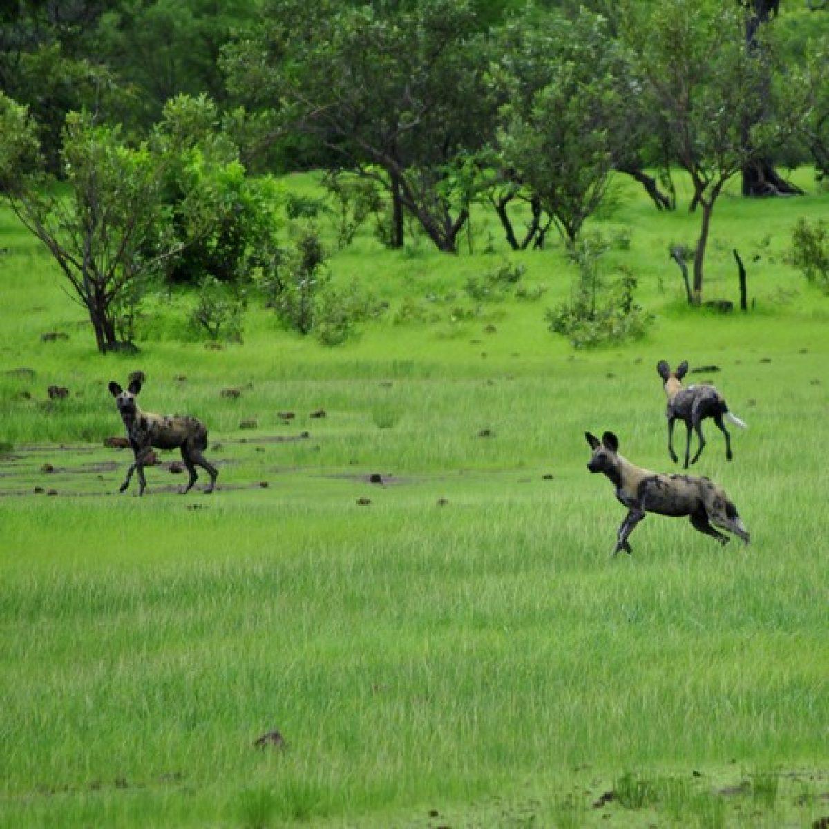 Parques naturales y reservas