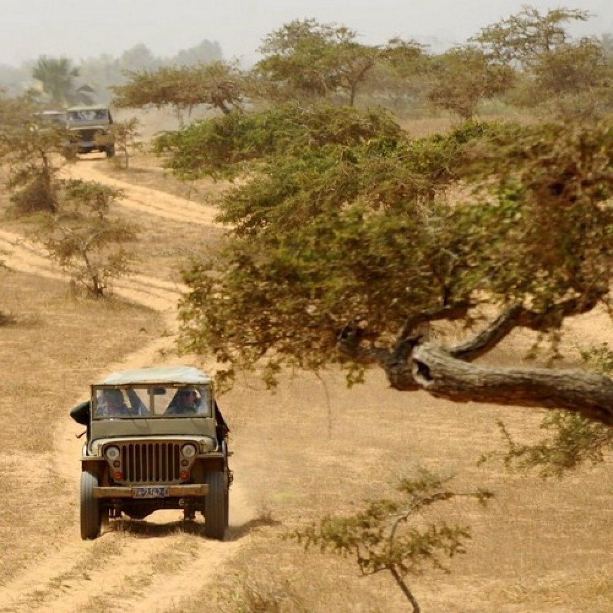 La Savane en Jeep