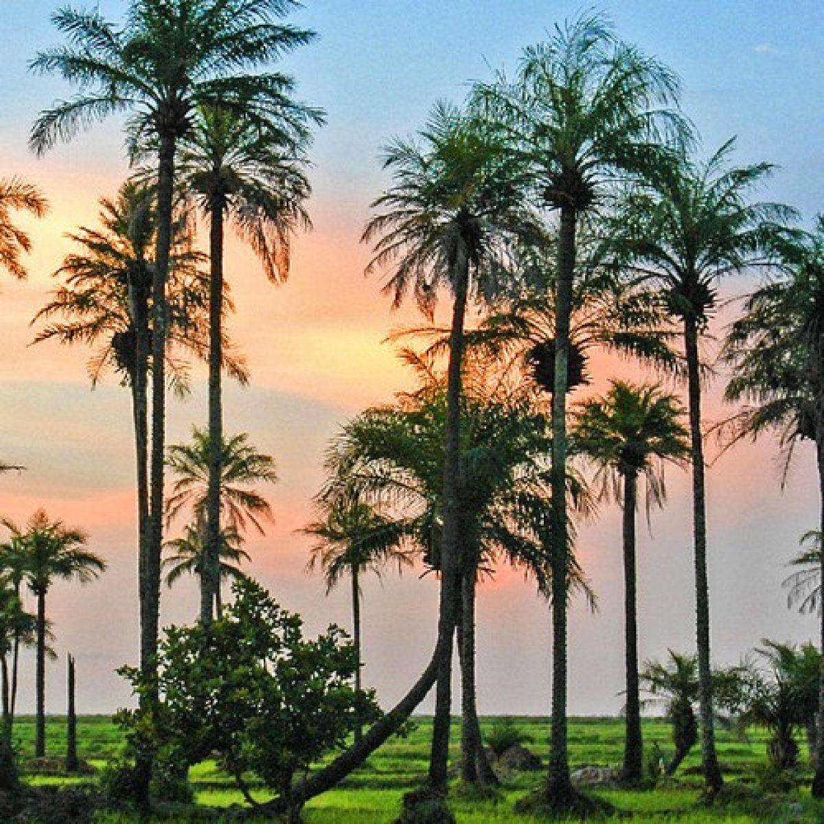 Mon voyage au Sénégal