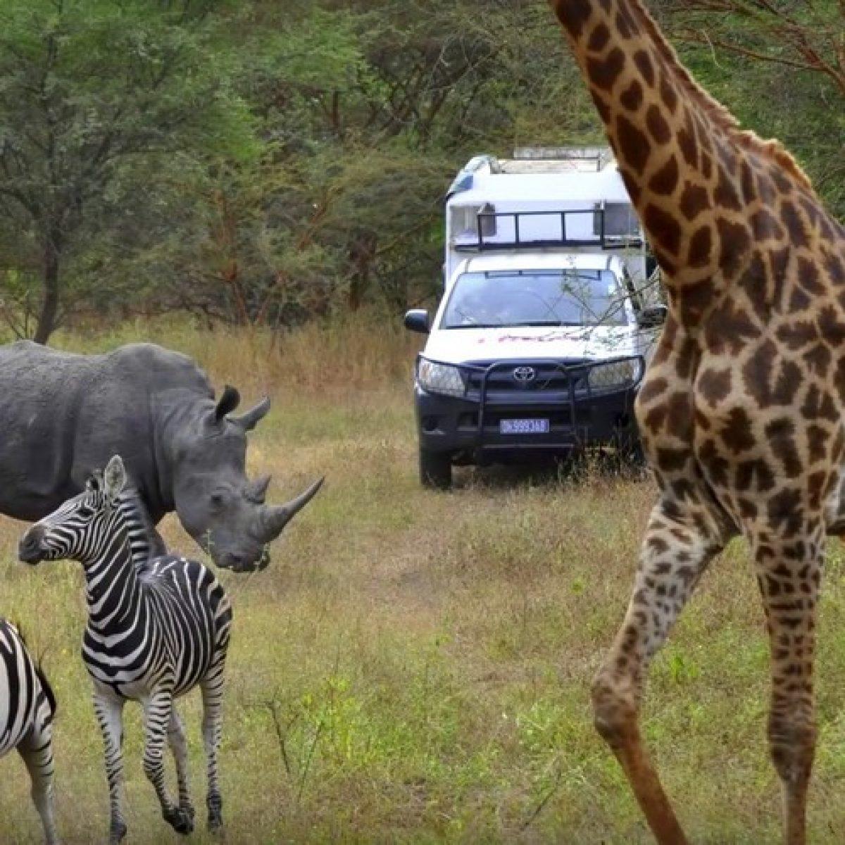 La Reserva de los animales de Bandia - Medio día