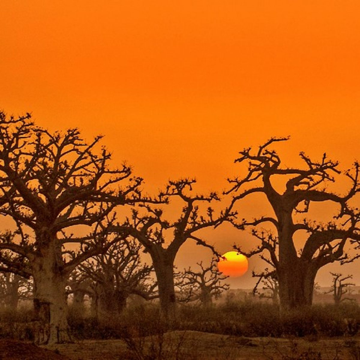 The Baobab Route