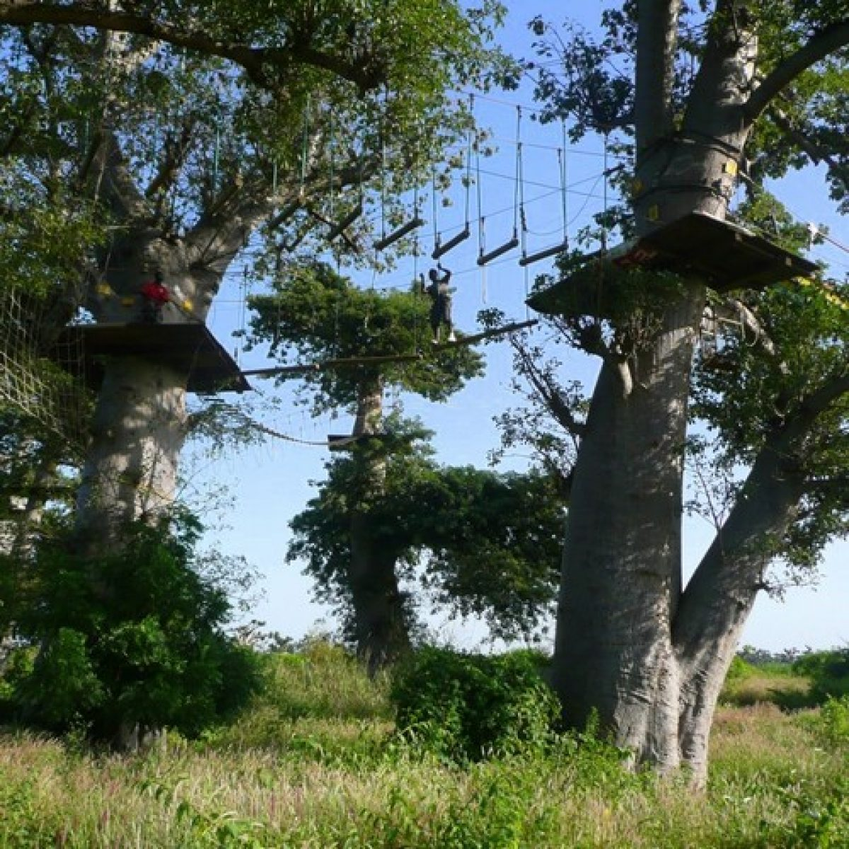 Accro-Baobab - 1/2 Day