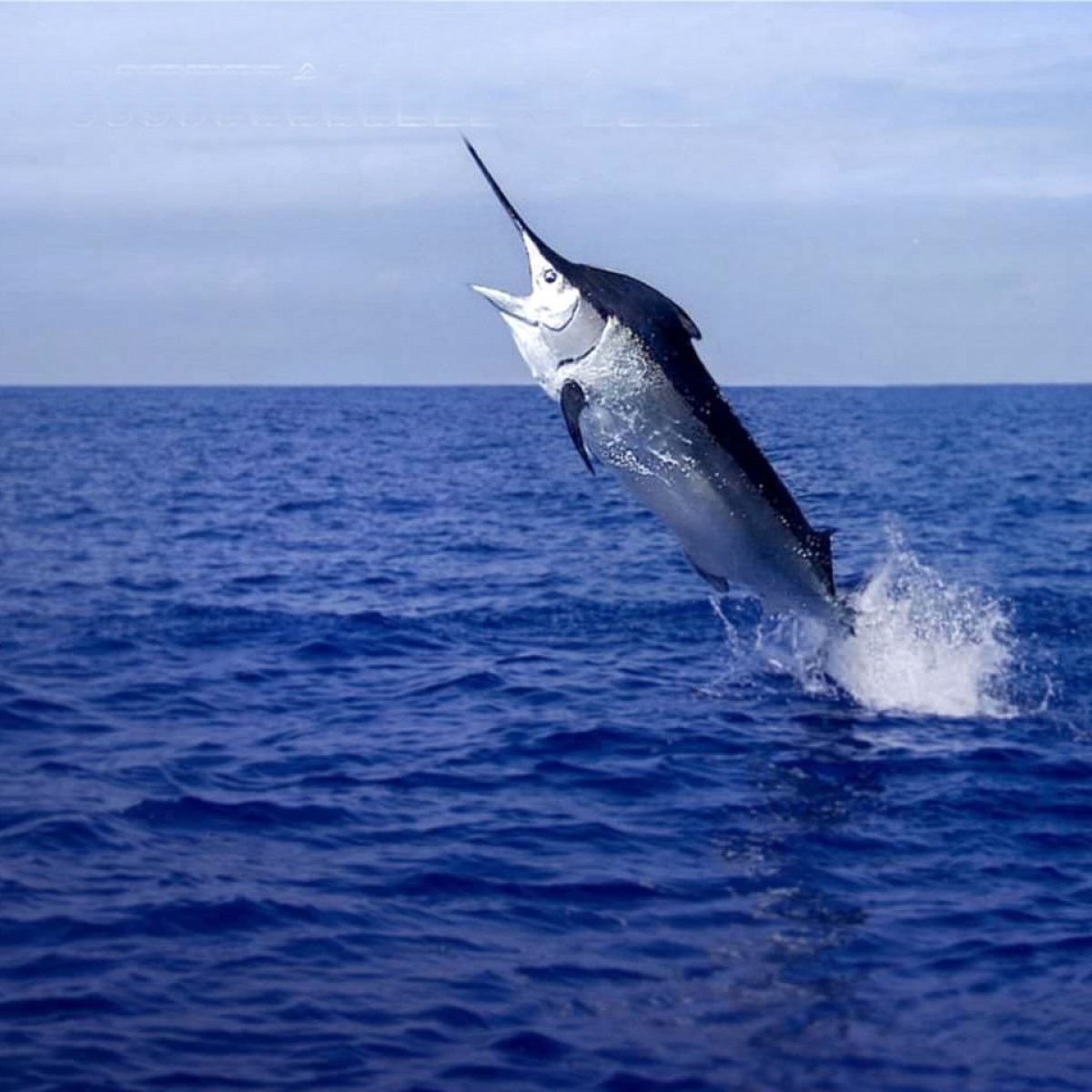 Sortie Pêche au Gros ou à la Palangrotte - Journée